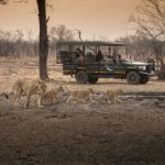 Matetsi Game Drives