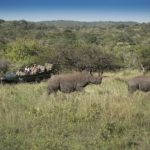 Game Drives, Wildlife and Activities at Phinda